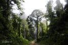 2010 Borneo